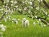Demi i kwitnące drzewo